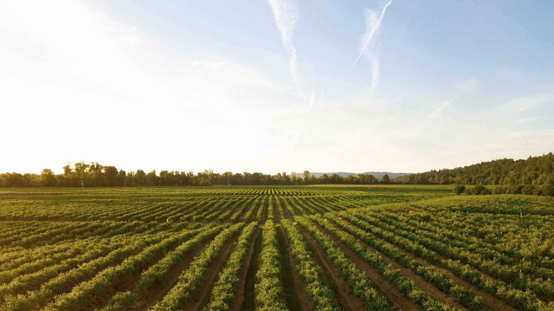 cuaderno de campo digital para la agricultura